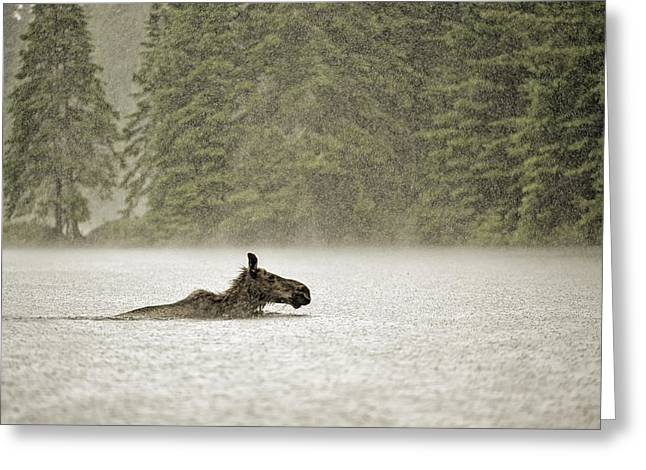 Overcast Day Greeting Cards - Wet Crossing Greeting Card by Claudio Bacinello