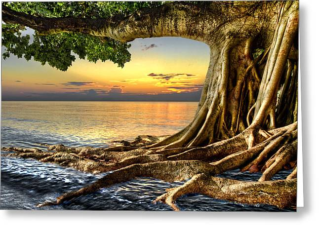Tree Roots Art Greeting Cards - Wet Dreams Greeting Card by Debra and Dave Vanderlaan