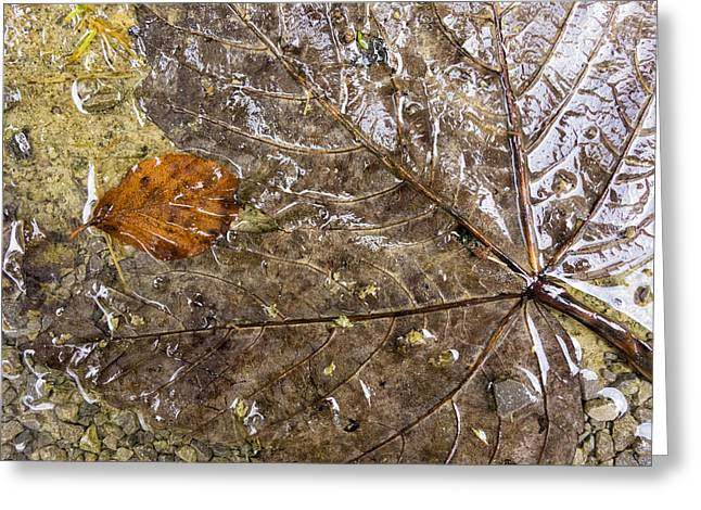Subtle Colors Photographs Greeting Cards - Wet fall foliage with subtle brown tones Greeting Card by Matthias Hauser