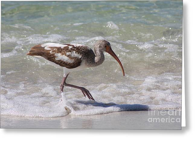 Seacape Greeting Cards - Wet Feet Greeting Card by Christiane Schulze Art And Photography