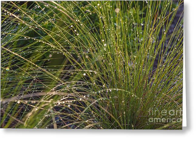 Close Focus Nature Scene Greeting Cards - Wet Grass Greeting Card by Juan  Silva