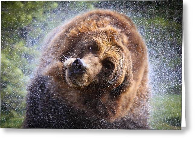 Shower Head Greeting Cards - Wet Griz Greeting Card by Steve McKinzie