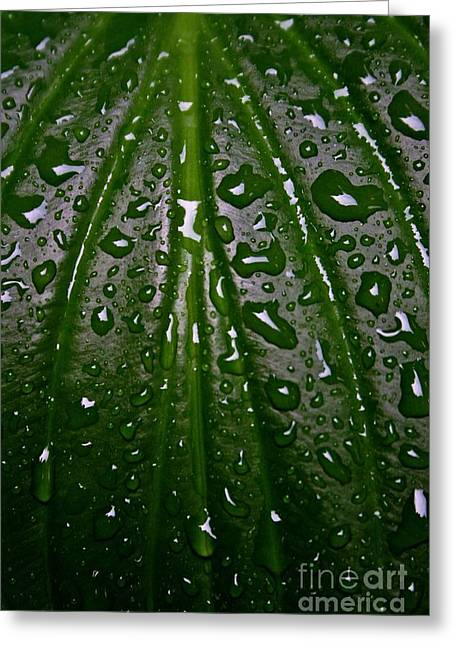 Beads Of Water Greeting Cards - Wet Hosta Leaf Greeting Card by Henry Kowalski