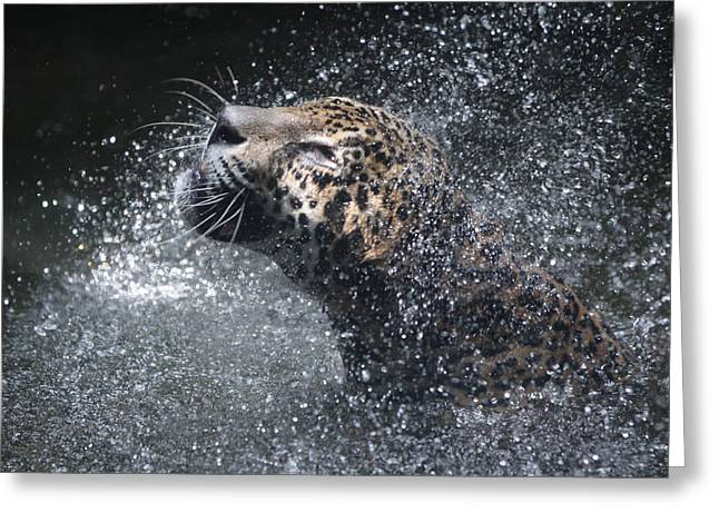 Cat Pyrography Greeting Cards - Wet Jaguar  Greeting Card by Shoal Hollingsworth
