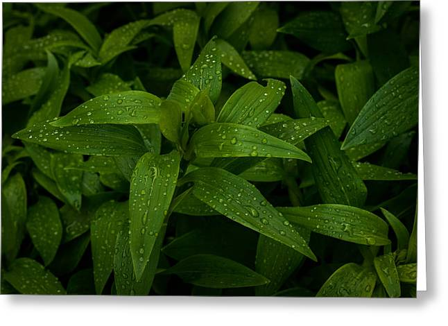 Dewdrops Greeting Cards - Wet Leaves Greeting Card by Marco Oliveira