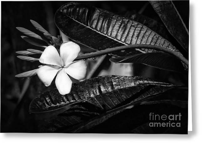 Florida Flowers Greeting Cards - Wet Plumeria Flower Greeting Card by Sabrina L Ryan