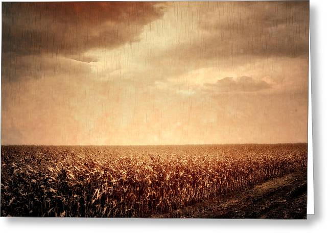 Cornfield Digital Art Greeting Cards - Wet Season Greeting Card by Wim Lanclus