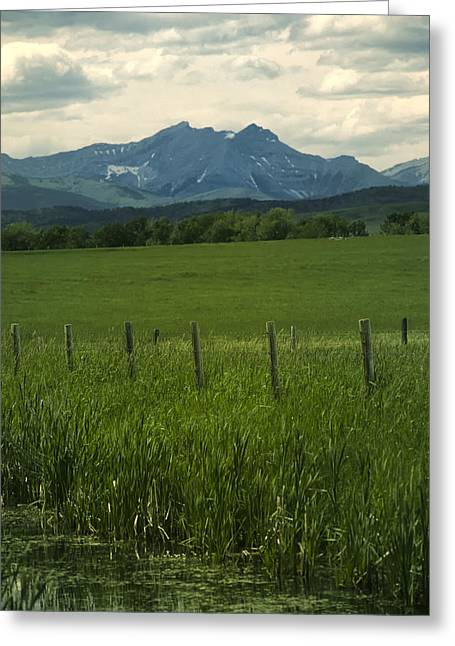 Pastureland Greeting Cards - Wet Spring Greeting Card by Roderick Bley