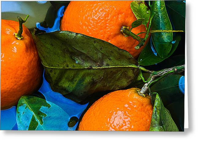 Wet Tangerines Greeting Card by Alexander Senin