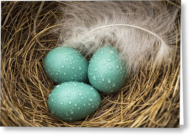 Jean Noren Greeting Cards - Wet Trio of Robins Eggs Greeting Card by Jean Noren