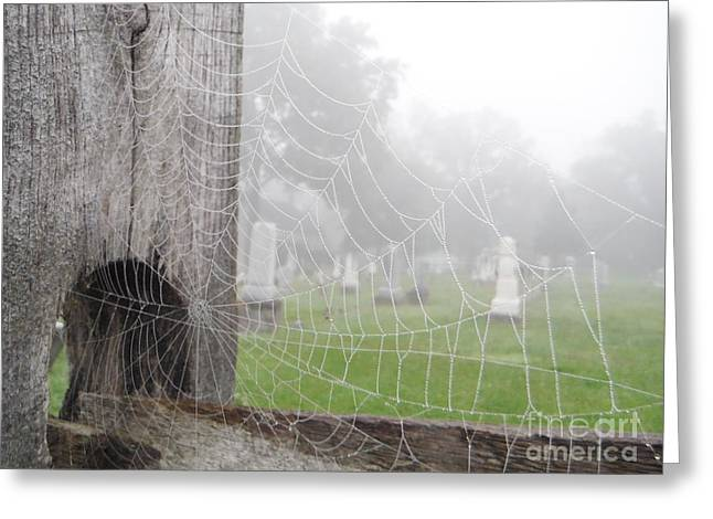 Beads Of Water Greeting Cards - Wet Web Of Life Greeting Card by Paddy Shaffer