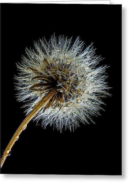 Achene Greeting Cards - Wet Weed Greeting Card by Jean Noren