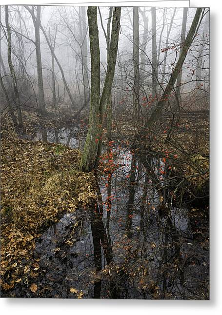 Wetland At Great Oak Park Greeting Card by Fran Gallogly