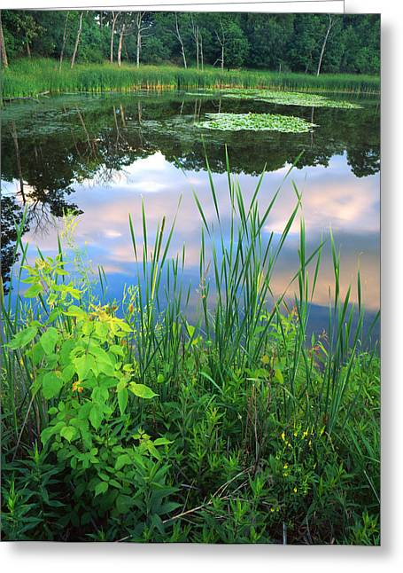 Lilly Pads Greeting Cards - Wetland Serenity Greeting Card by Ray Mathis