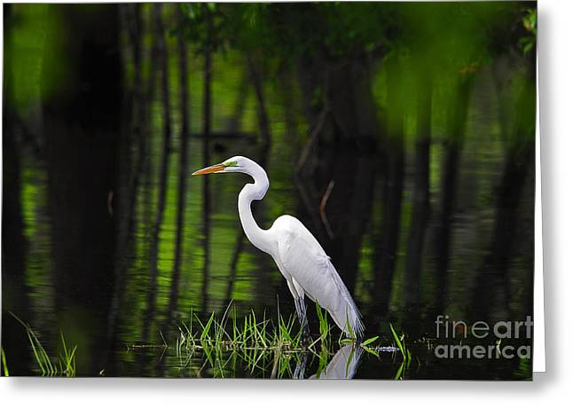 Great White Egret Greeting Cards - Wetland Wader Greeting Card by Al Powell Photography USA