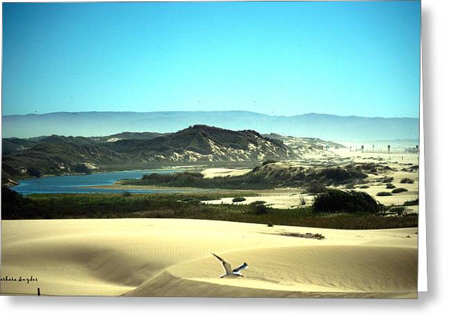 Snow. Ocean Greeting Cards - Wetlands In The Dunes Greeting Card by Barbara Snyder