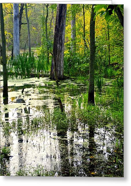 Willow Lake Greeting Cards - Wetlands Greeting Card by Frozen in Time Fine Art Photography