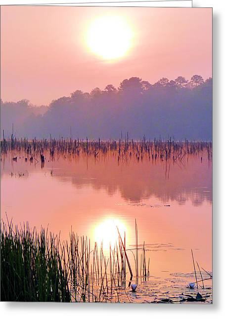 Ozark Alabama Greeting Cards - Wetlands Sunrise Greeting Card by JC Findley