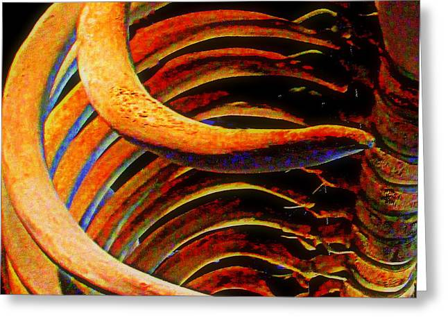 Whale Digital Greeting Cards - Whale Bone Greeting Card by Randall Weidner