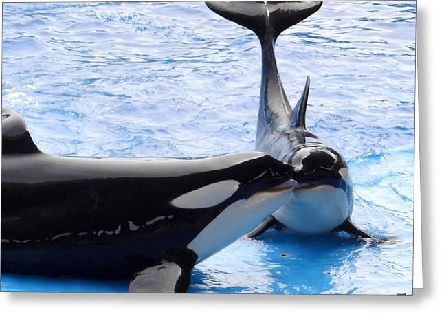 Seaworld Greeting Cards - Whale Kiss Greeting Card by Keith Stokes