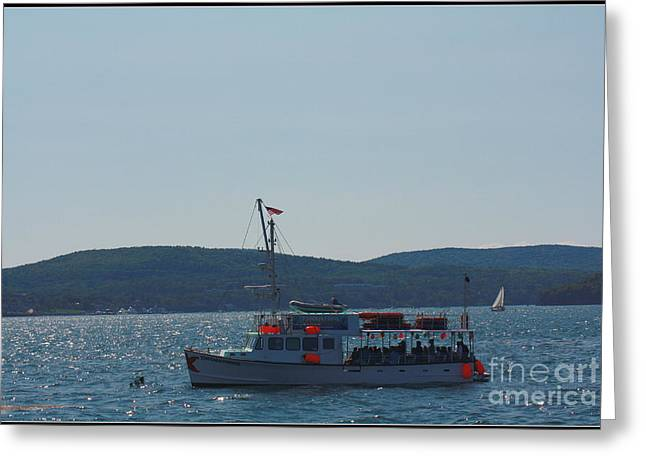 Whale Watching At Bar Harbor Greeting Card by Dora Sofia Caputo Photographic Art and Design