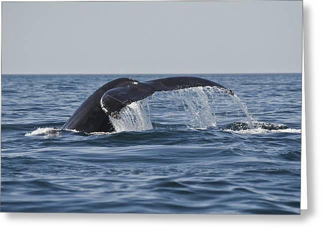 Roger Lewis Greeting Cards - Whale Watching Greeting Card by Roger Lewis