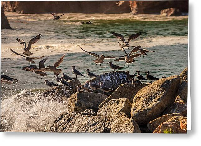 Whalers Cove Greeting Cards - Whalers Cove Birds Greeting Card by Mike Penney