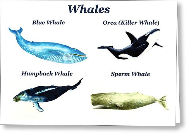 Humpback Whale Paintings Greeting Cards - Whales Greeting Card by Michael Vigliotti