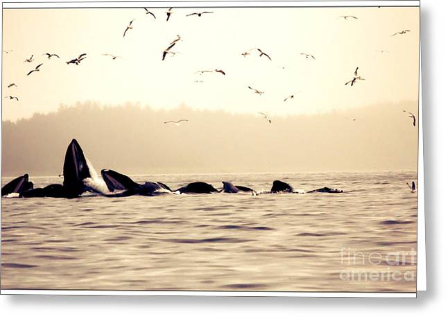 Whale Photographs Greeting Cards - Whales Greeting Card by Sophie Vigneault