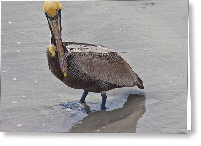 What Are You Lookin At Greeting Card by Betsy Knapp