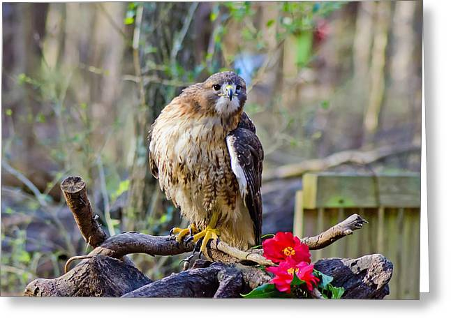 Charlotte Nc Prints Greeting Cards - What Are You Looking At Greeting Card by B Wayne Mullins