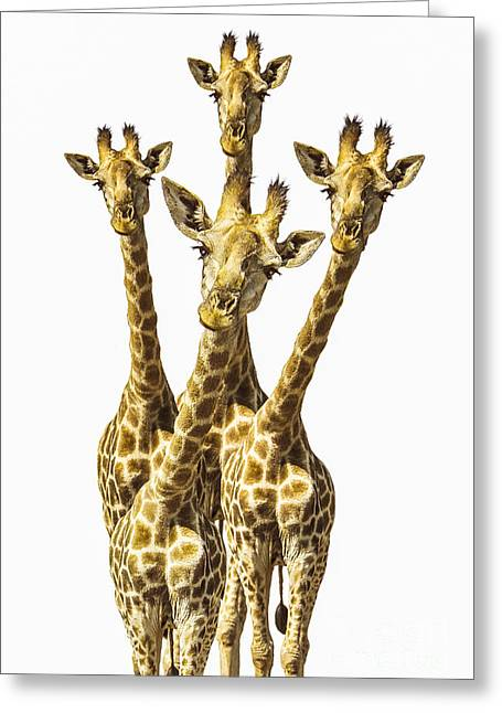 Giraffe Greeting Cards - What are YOU looking at? Greeting Card by Diane Diederich