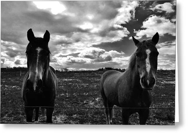 Solebury Farm Greeting Cards - What Are You Looking At Greeting Card by Greg Kear