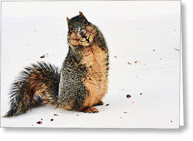 Eastern Fox Squirrel Greeting Cards - What Do You Mean I Made a Mess? Greeting Card by Marcia Colelli