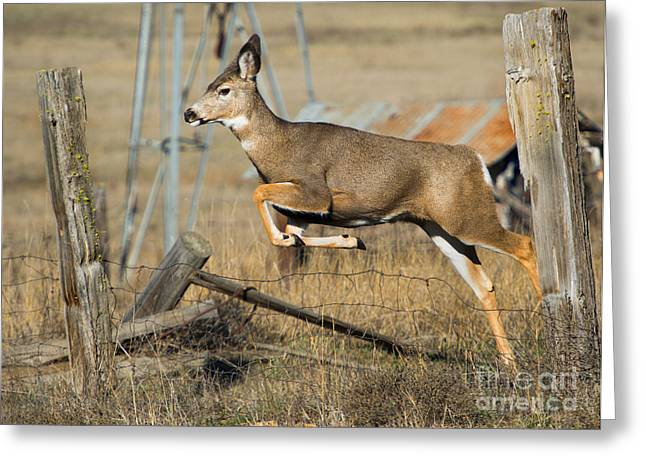 Doe Greeting Cards - What Fence Greeting Card by Mike  Dawson