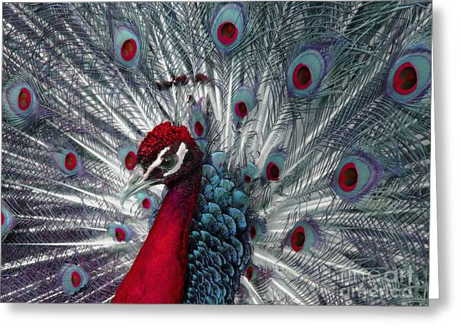 Ann Horn Greeting Cards - What If - A Fanciful Peacock Greeting Card by Ann Horn