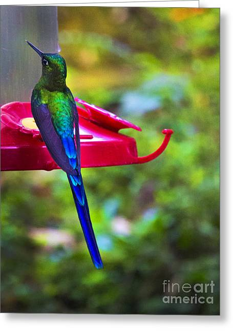 Hovering Greeting Cards - What Is My Name? Greeting Card by Al Bourassa