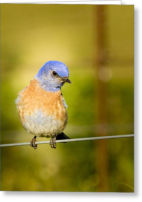 Bird On A Wire Greeting Card by Jean Noren