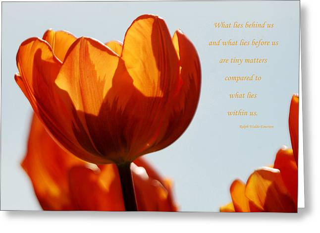 Spring Bulbs Greeting Cards - What Lies Within Us Greeting Card by Diana Hopkins