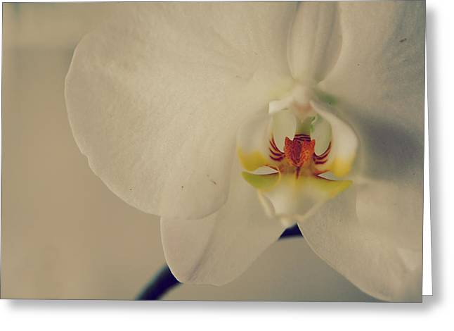 Orchid Greeting Cards - What Love Felt Like Greeting Card by Laurie Search