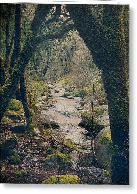Moss Digital Art Greeting Cards - What We Couldve Had Greeting Card by Laurie Search