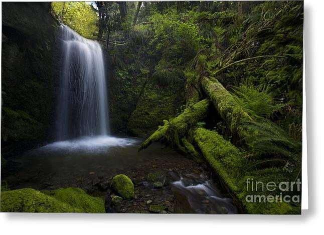 Whatcom Falls Serenity Greeting Card by Mike Reid