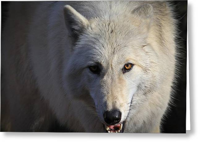 Preditor Greeting Cards - Whats for Dinner Greeting Card by Steve McKinzie