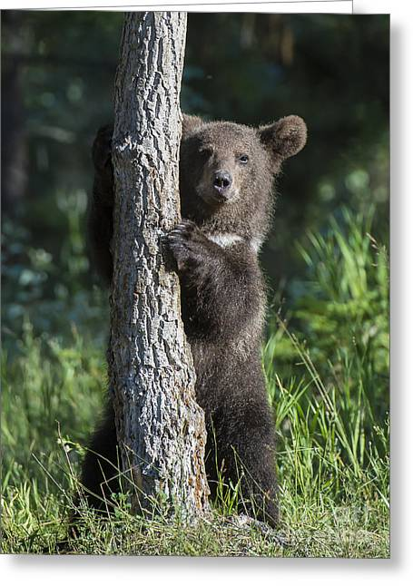 North American Wildlife Photographs Greeting Cards - Whats Mine is Mine III Greeting Card by Sandra Bronstein