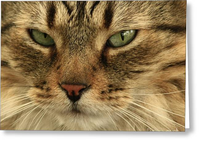 Whats Up Pussy Cat Greeting Card by Inspired Nature Photography Fine Art Photography