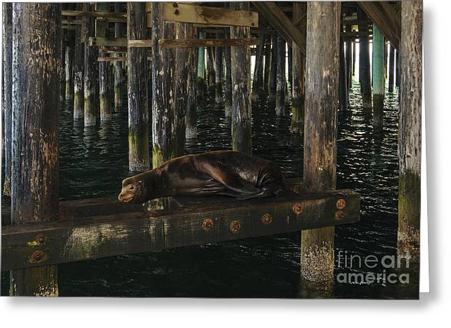 Santa Cruz Wharf Greeting Cards - Whatyoulookinat? Greeting Card by Katja Zuske