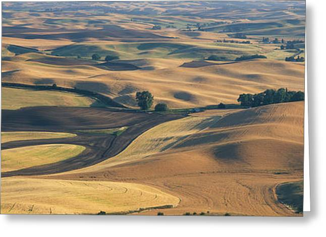 Plantlife Greeting Cards - Wheat And Barley, S.e. Washington Greeting Card by Panoramic Images