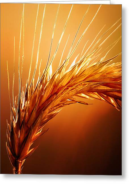 Straw Greeting Cards - Wheat Close-up Greeting Card by Johan Swanepoel