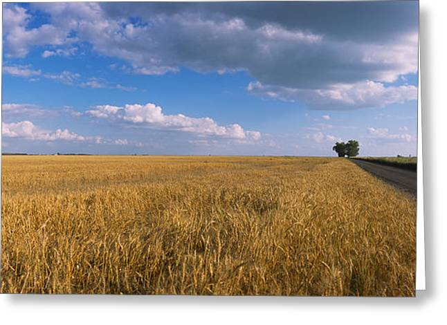 Cumulus Clouds Greeting Cards - Wheat Crop In A Field, North Dakota, Usa Greeting Card by Panoramic Images