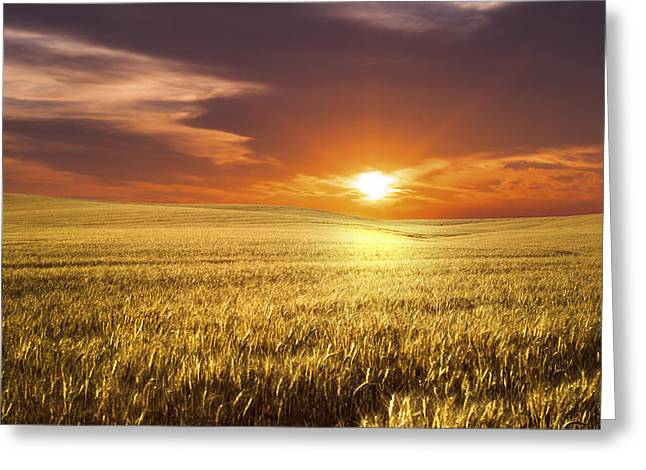 Produce Greeting Cards - Wheat Field Greeting Card by Aged Pixel